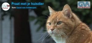 Dierencommunicator Kristina Boey bij Gazet van Antwerpen