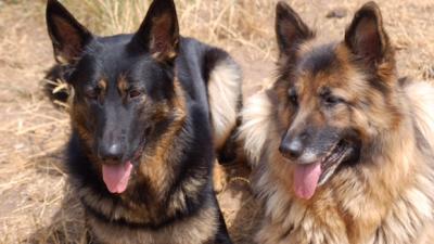 Cursus : Alternatieve therapieën voor dieren